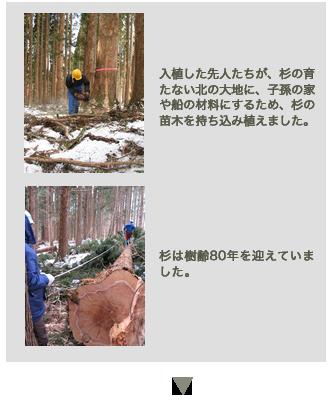 新月伐採の工程1