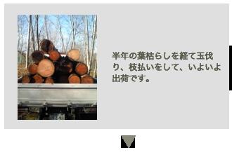 新月伐採の工程3